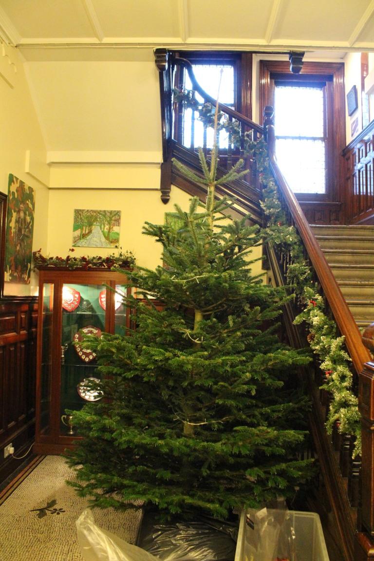 Christmas Tree 2017 - 1